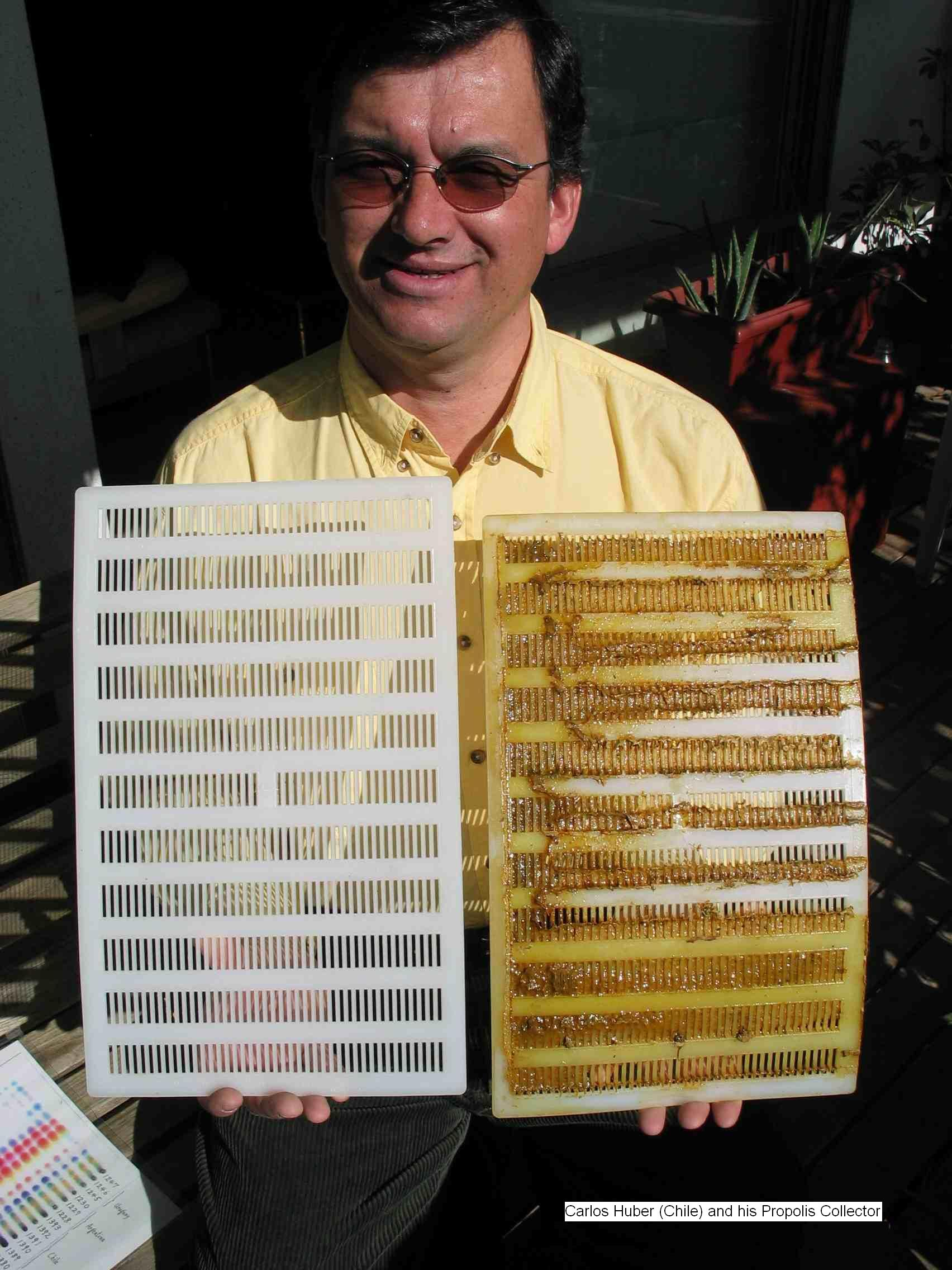 Carlos and his Chilean propolis collector